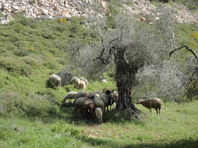 Countryside Outside of Nablus